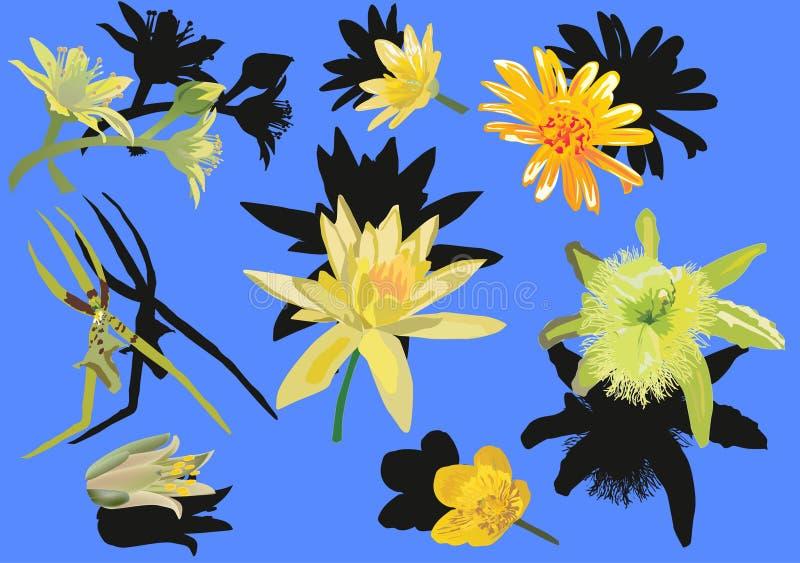 Download голубые установленные цветки желтыми Иллюстрация вектора - иллюстрации насчитывающей элементы, украшение: 18393561