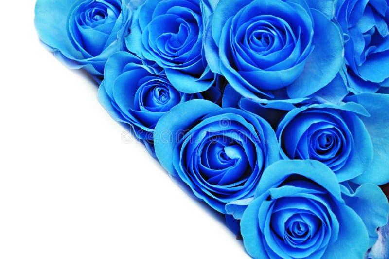 голубые цветки подняли стоковое изображение rf