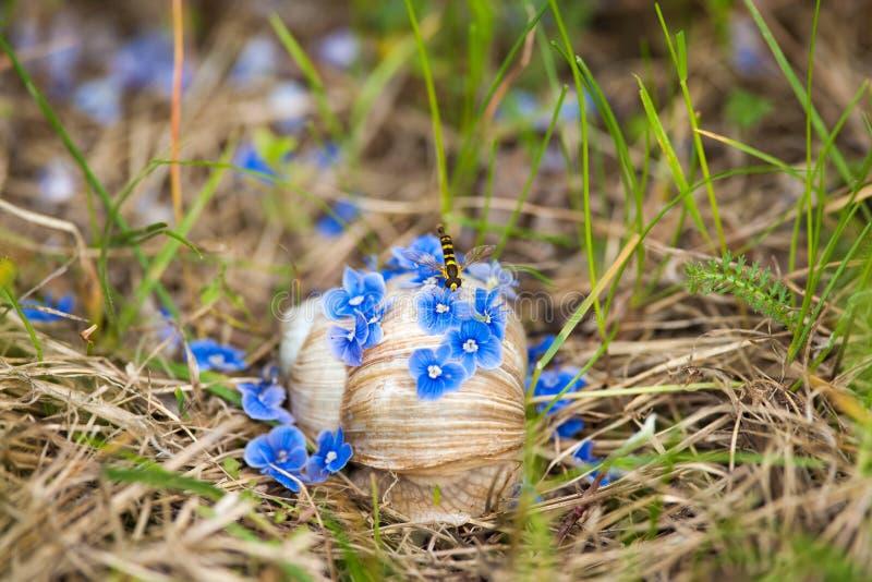 Голубые цветки упали на улитку ветром с молодой осой стоковые фотографии rf