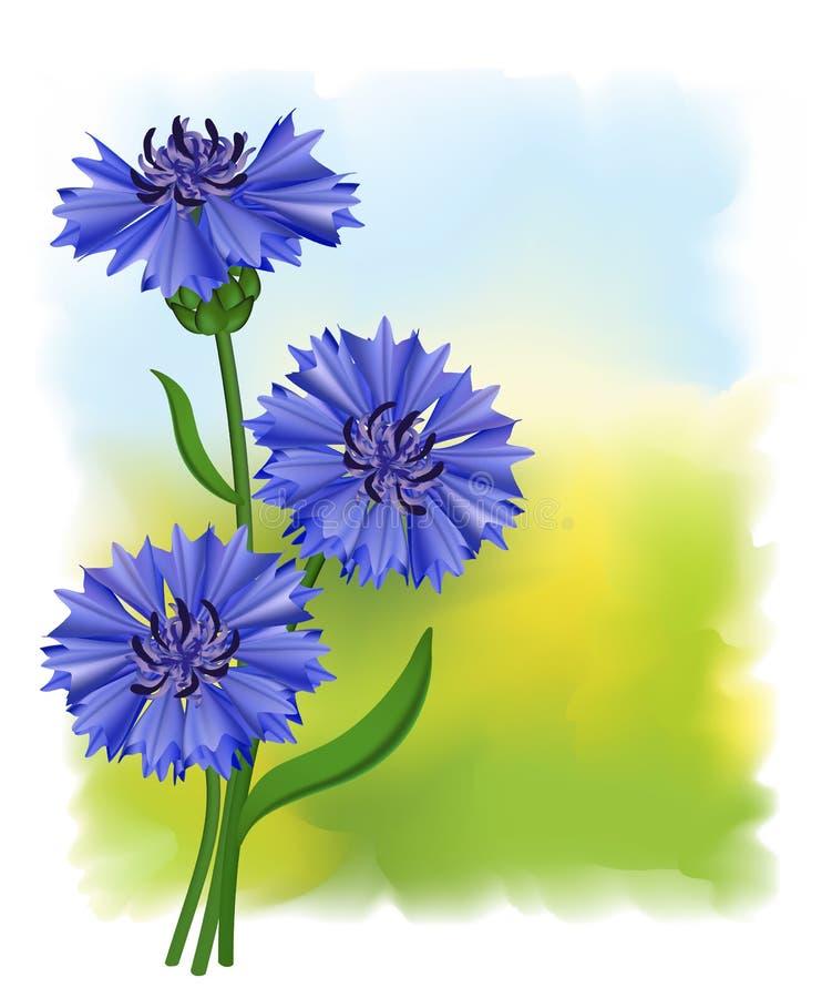 голубые цветки cyanus cornflower centaurea иллюстрация штока