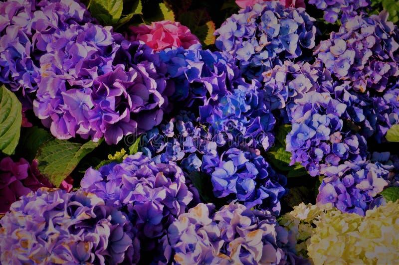 Голубые цветы, фиолетовые стоковое фото rf