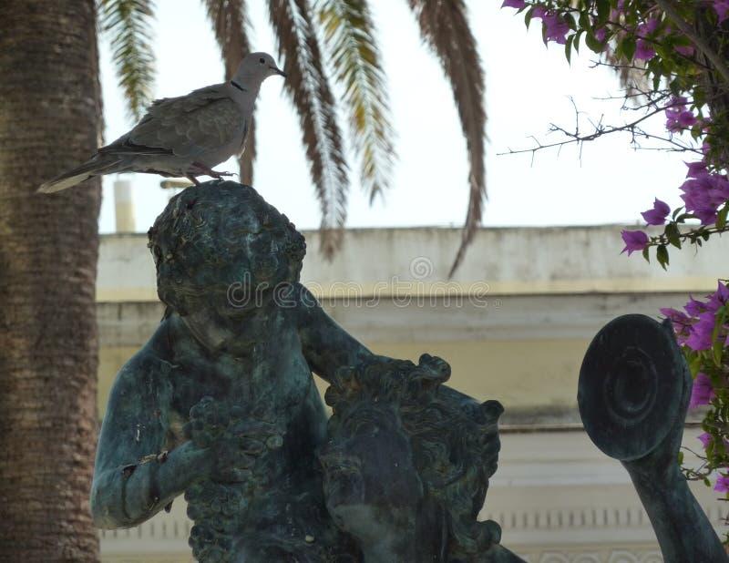 Голубь сидя на голове статуи древнегреческия стоковая фотография