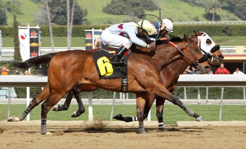 Download гонка шеи лошади редакционное стоковое фото. изображение насчитывающей kerwin - 18387378