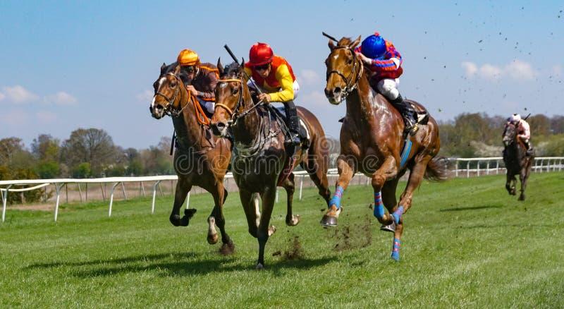 Гонки лошадей на следе дерновины стоковое изображение