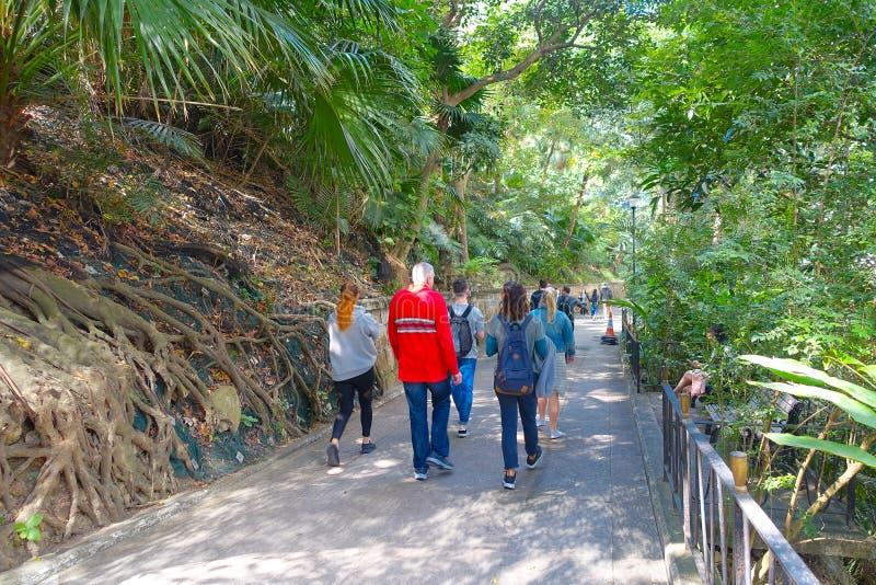 ГОНКОНГ, КИТАЙ - 26-ОЕ ЯНВАРЯ 2017: Неопознанные люди идя внутри парка в лесе Гонконга, Китая иллюстрация штока