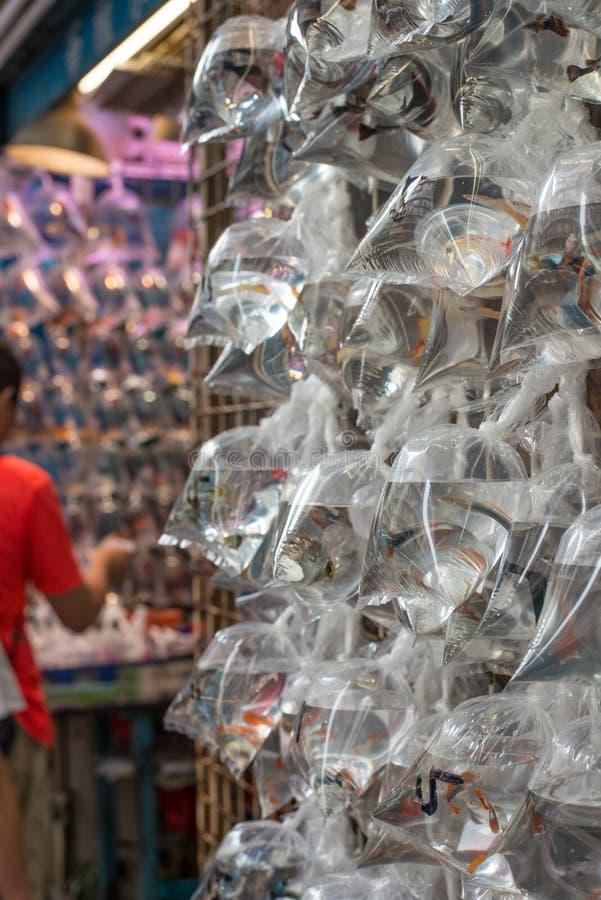 Гонконг продавая рыб золота в поли сумках стоковые изображения rf