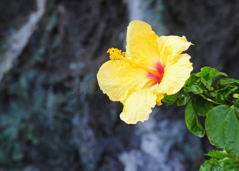 Гонолулу стоковое фото