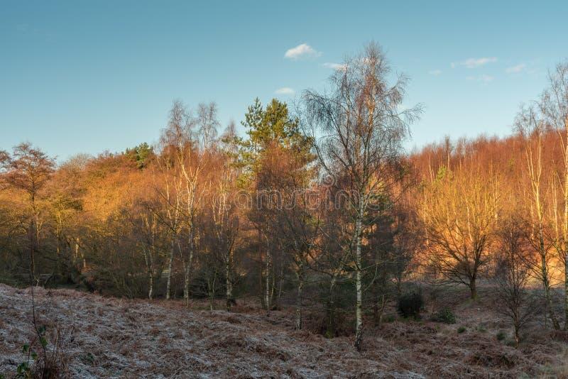 Гоньба Cannock, AONB в Стаффордшире стоковое изображение rf