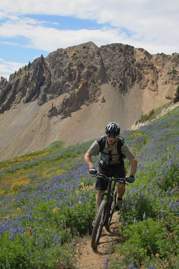 гора велосипедиста стоковые фотографии rf