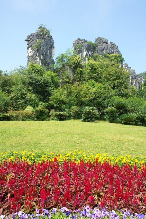 Гора верблюда стоковое изображение rf