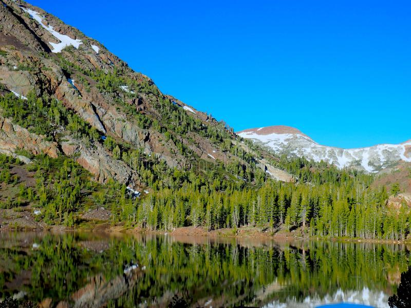 Гора весны с соснами отраженными в озере стоковые фото