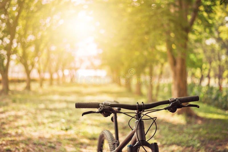 Гора велосипед на солнечности стоковое изображение