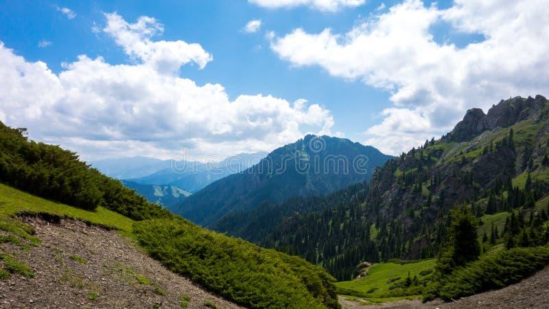 Гора, высокая широта, зеленая стоковые фото