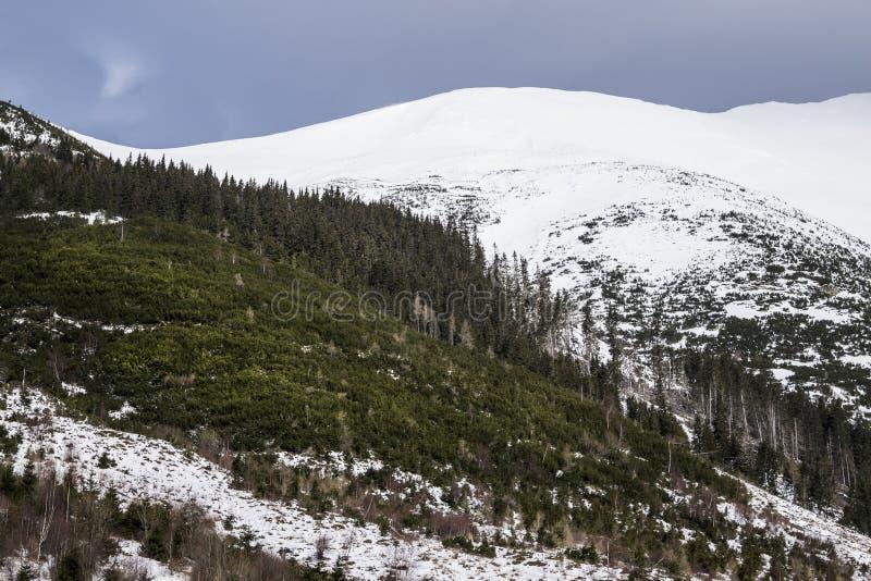 Гора в Словакии, высоком Tatras стоковое фото