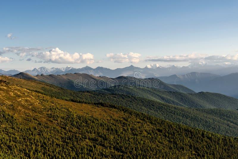 Гора заволакивает лес неба стоковое фото