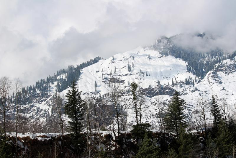 Гора и дерево городка Manali Himachal Pradesh в Индии стоковые изображения rf