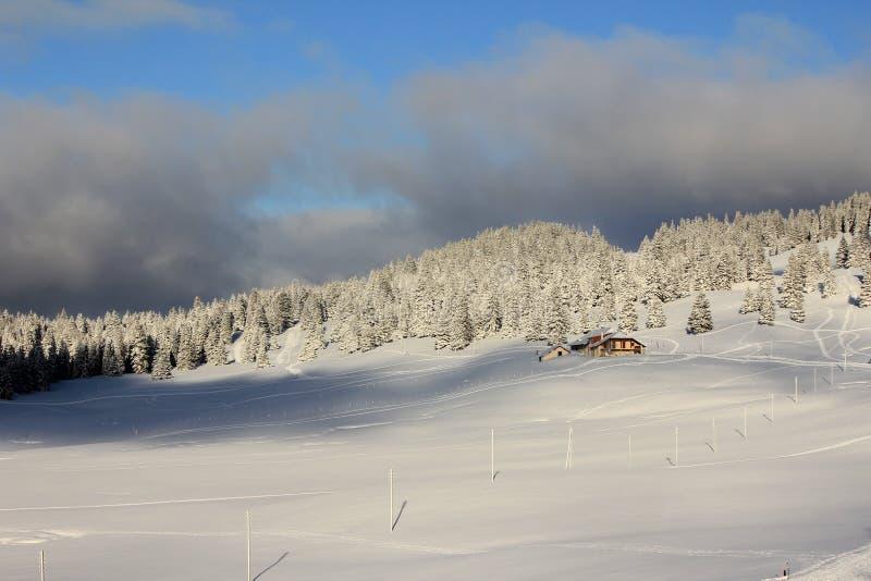 Гора и деревья и снежок пожара стоковые фото