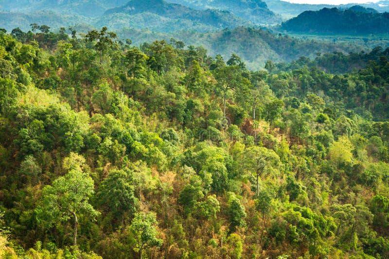 Гора и деревья дождевого леса стоковое изображение rf