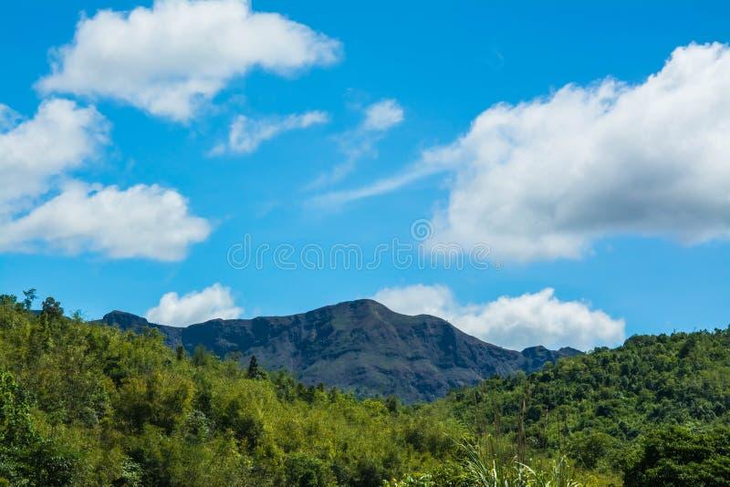 Гора и деревья дождевого леса стоковая фотография