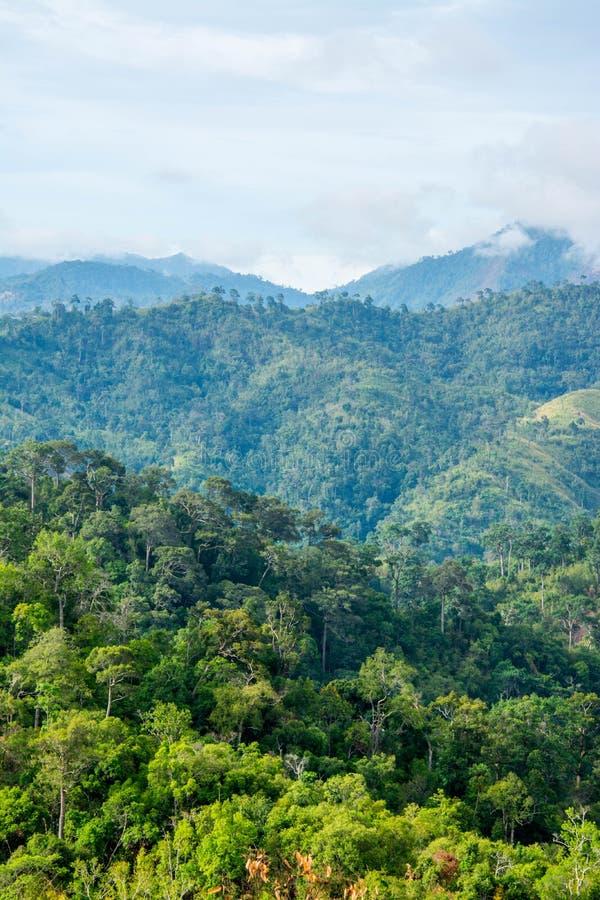 Гора и деревья дождевого леса стоковые фотографии rf
