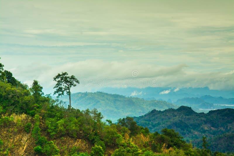 Гора и деревья дождевого леса стоковое изображение