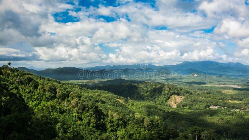 Гора и деревья дождевого леса стоковое фото rf