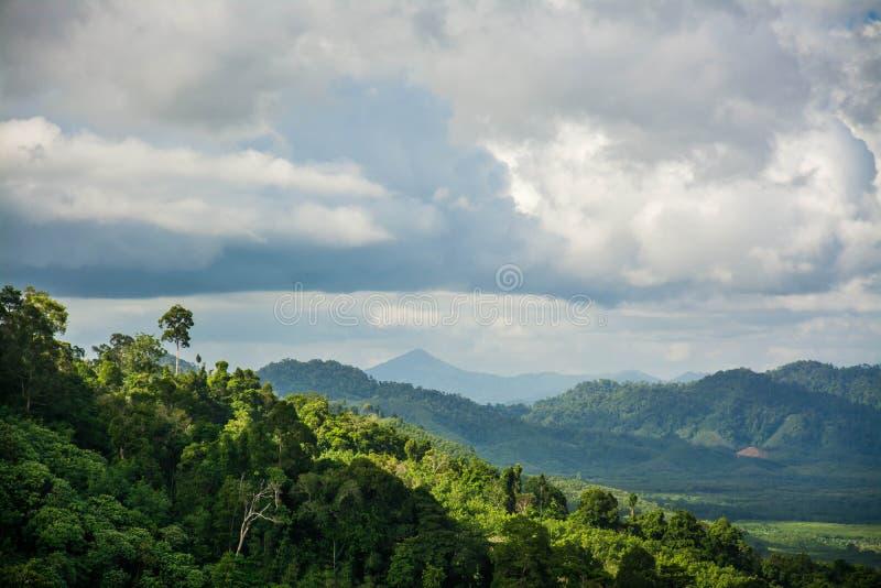 Гора и деревья дождевого леса стоковая фотография rf