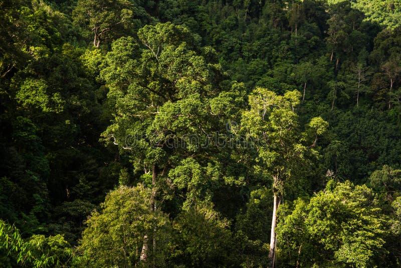 Гора и деревья дождевого леса стоковые фото