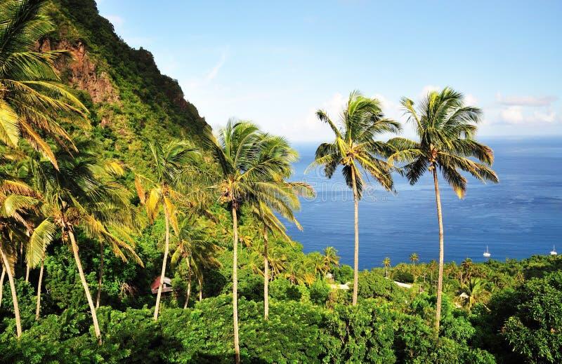 Гора и пальмы стоковые фото