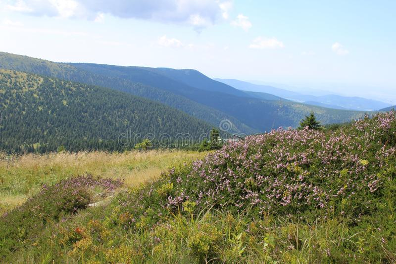 Гора и розовые цветки стоковое фото