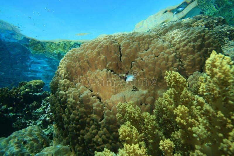 гора коралла стоковые изображения