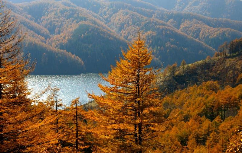 Download гора лиственниц озера осени Стоковое Фото - изображение насчитывающей ландшафт, яркое: 6862328