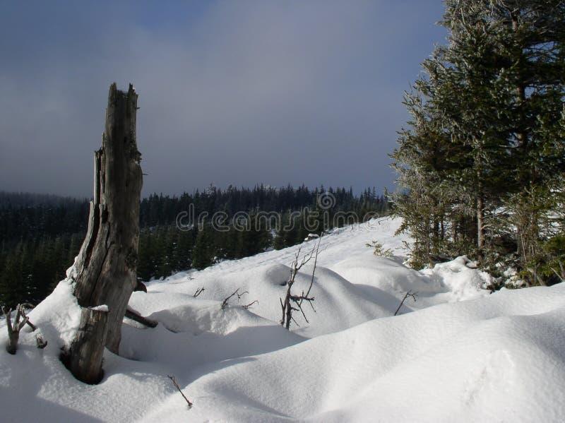 гора лужка стоковая фотография rf