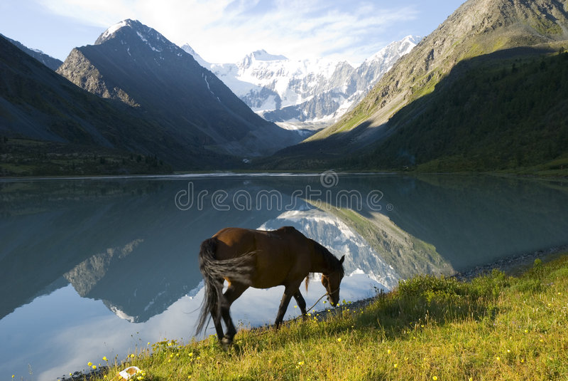 гора озера лошади ближайше стоковая фотография rf