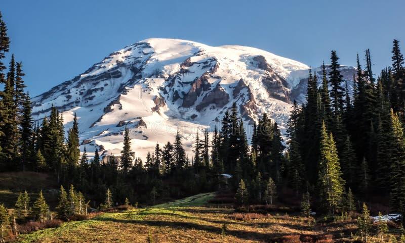 Гора покрытая снегом с деревьями и лугом стоковое изображение