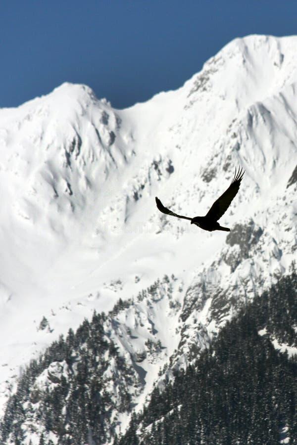 гора птицы стоковое фото