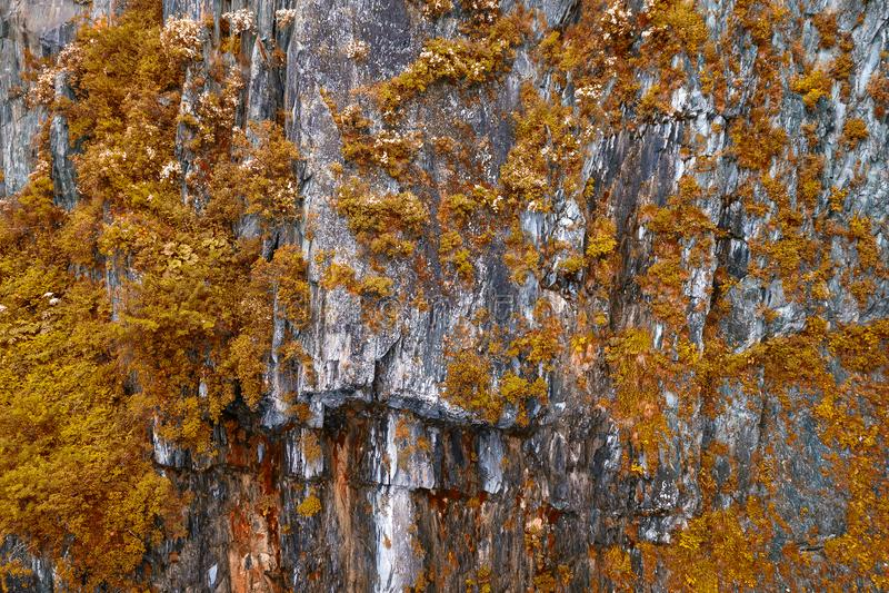 Гора с камнями на которых растут желтые и оранжевые кустарники и деревья на теплый день осени в бабьем лете стоковое фото rf