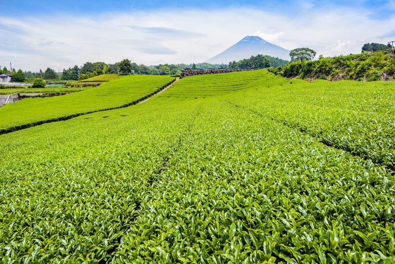 Гора Фудзи с плантацией зеленого чая на городке Fujinomiya, Shizuoka, Японии в лете стоковые фотографии rf