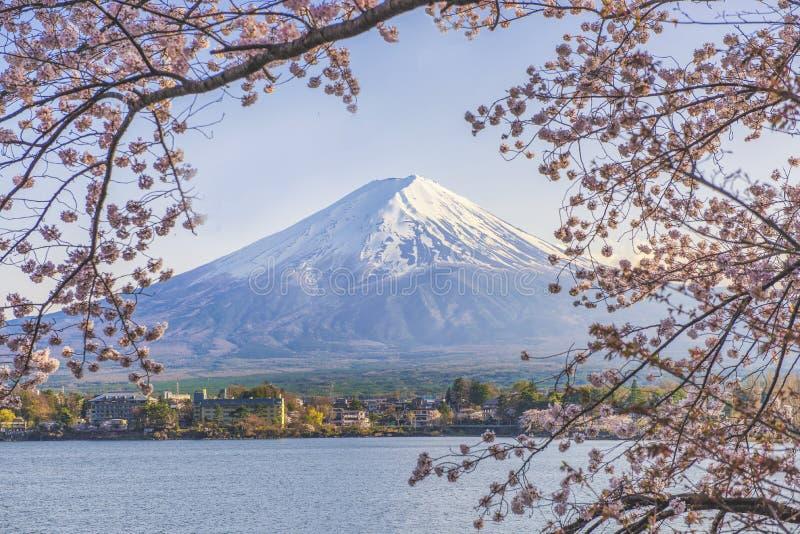 Гора Фудзи и дерево Сакуры с пристанью яхты на озере Kawaguchiko стоковая фотография rf