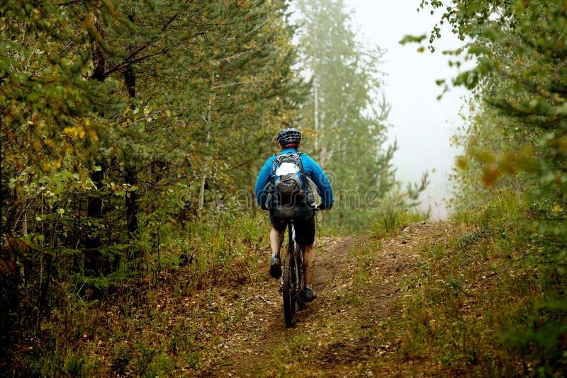Гора человека велосипед в лесе осени стоковые изображения rf