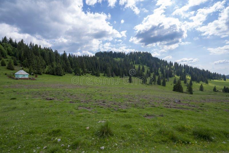 Гора Apuseni Zona Padis Румыния стоковое фото rf