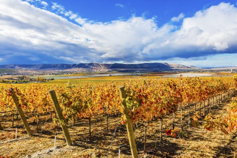Гора Benton желтых виноградников падения виноградин лоз красная стоковая фотография