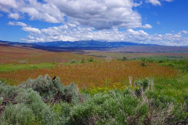Гора Cuddy, на Midvale, Айдахо стоковые изображения rf