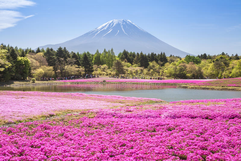гора fuji стоковая фотография rf