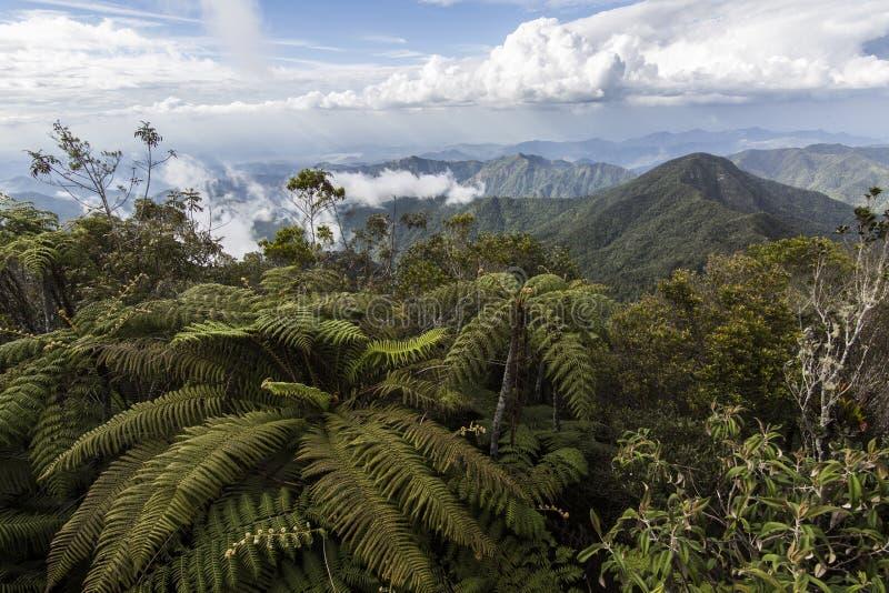 Гора Turquino Кубы стоковая фотография