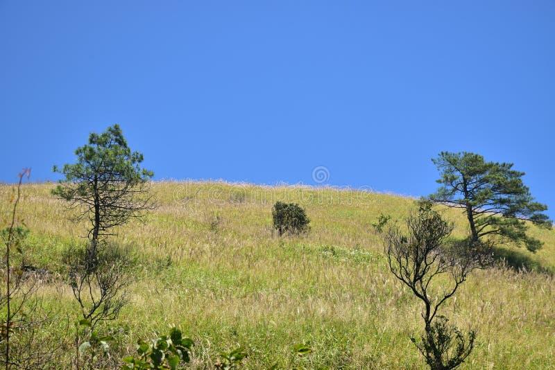 гора wugong æ¦åŠŸå±± стоковые фотографии rf