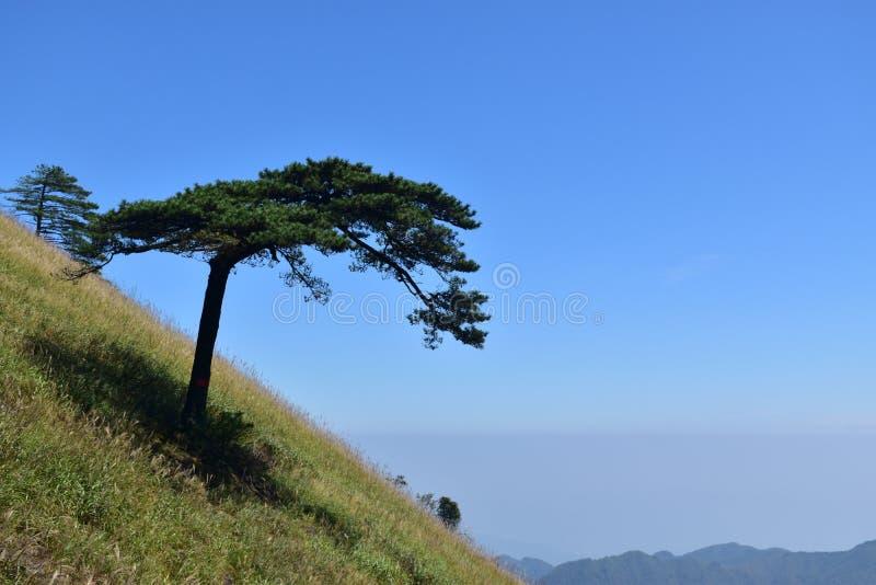 Гора Wugong стоковые фото