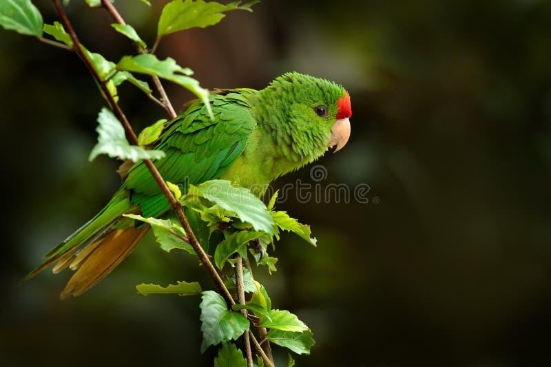 Горбатая птица в цветочном цветочном саду, Санта-Марта в Колумбии Птица летит в естественной среде обитания Дикая природа в Колум стоковое фото rf