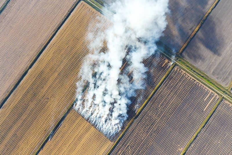 Горение соломы риса в полях Дым от горения соломы риса в проверках Огонь на стоковое изображение