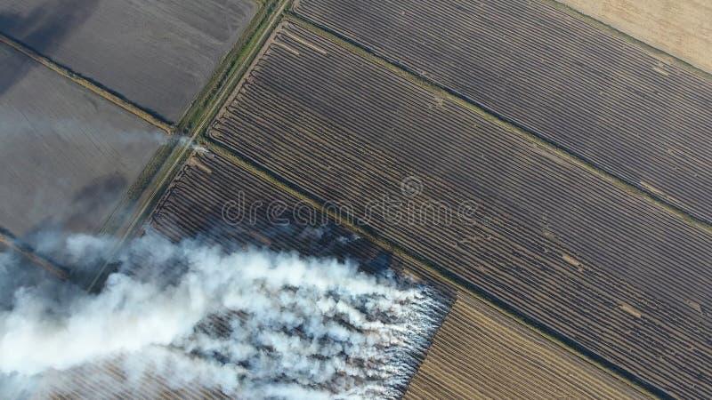 Горение соломы риса в полях Курите от горения соломы риса в проверках Пожар на поле стоковое изображение rf
